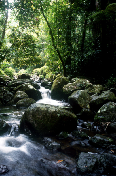 image of a stream of water in a national forest