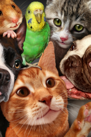 picture of pets